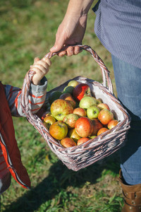 Woman and little girl holding basket with apples