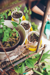 Young seedlings planted in a urban garden