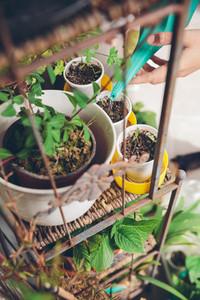 Woman hands watering seedlings in urban garden