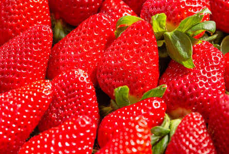 Background of tasty spanish strawberries freshly collected