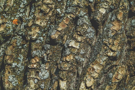 Full frame background of a texture of a tree bark  Macro photography
