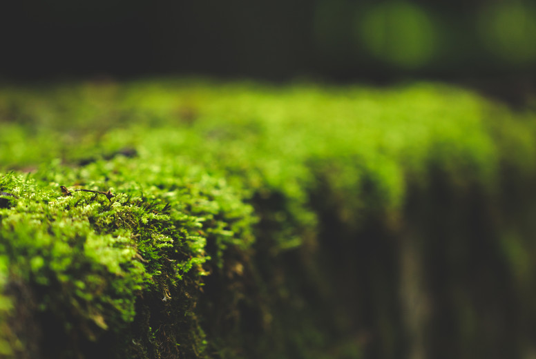 Macro photography of the moss on an old stone   Selective soft focus