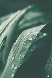 Macro photography of wet grass after rain Moody toned