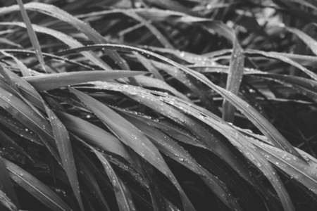 Macro photography of wet grass a