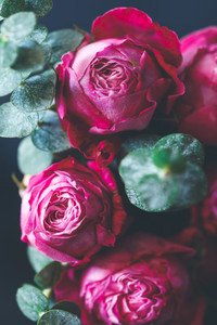Macro photography of dark pink roses bouquet over blue  Soft focus  top view  close up composition