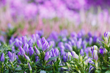 Violet and pink flowers on a spring meadow  Place for text  Full frame