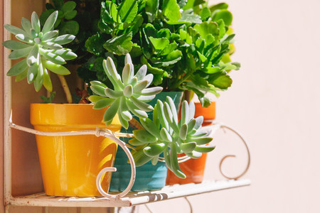 Various house green plants in flower pots on a metal shelf hanging on the wall