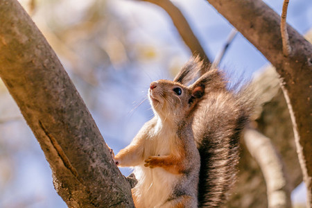Portrait of a squirrel on a tree in an autumn forest