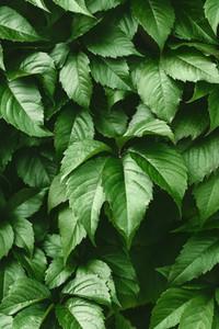 Vibrant green foliage nature full frame background