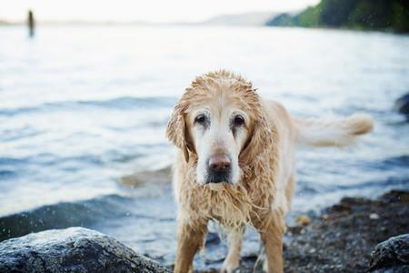 Portrait wet dog on beach