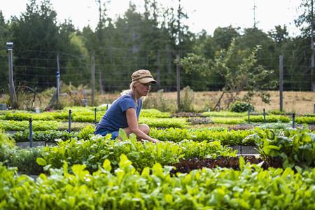 Female farmer tending to vegetable plants
