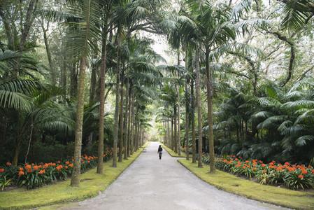 Woman walking along landscaped palm tree lined driveway Portugal