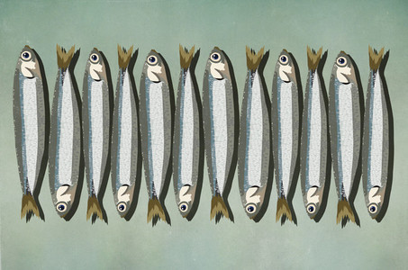 Sardines in a row