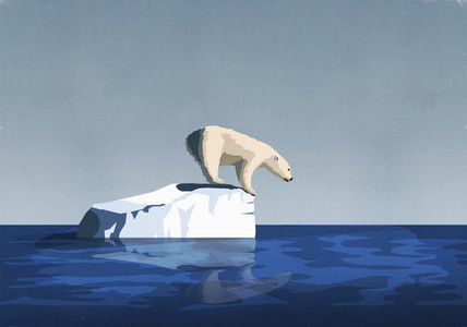 Polar bear fishing from on top of iceberg