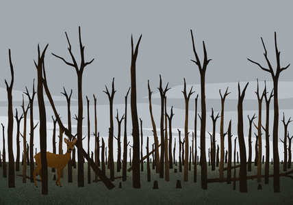 Deer standing among burned trees in woods after forest fire