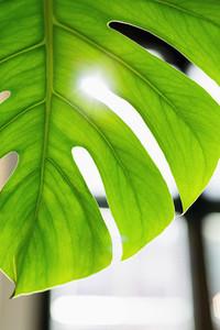 Close up vibrant green tropical plant leaf