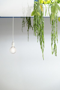 Hanging plant and light bulb