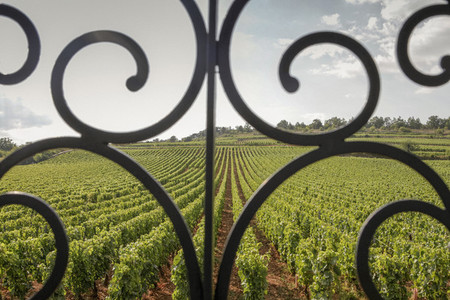 Scenic vineyard view behind scroll railing  France