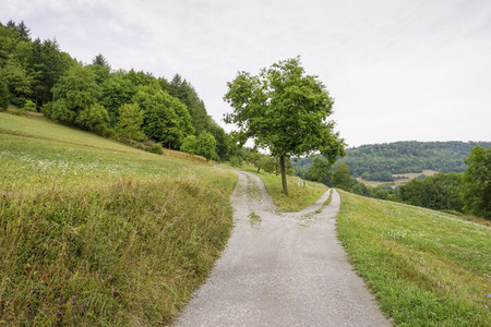 Divided path on rural green hillside Germany