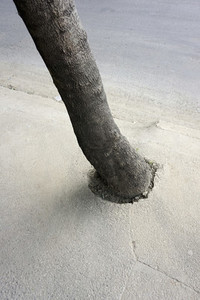 Tree growing out of concrete