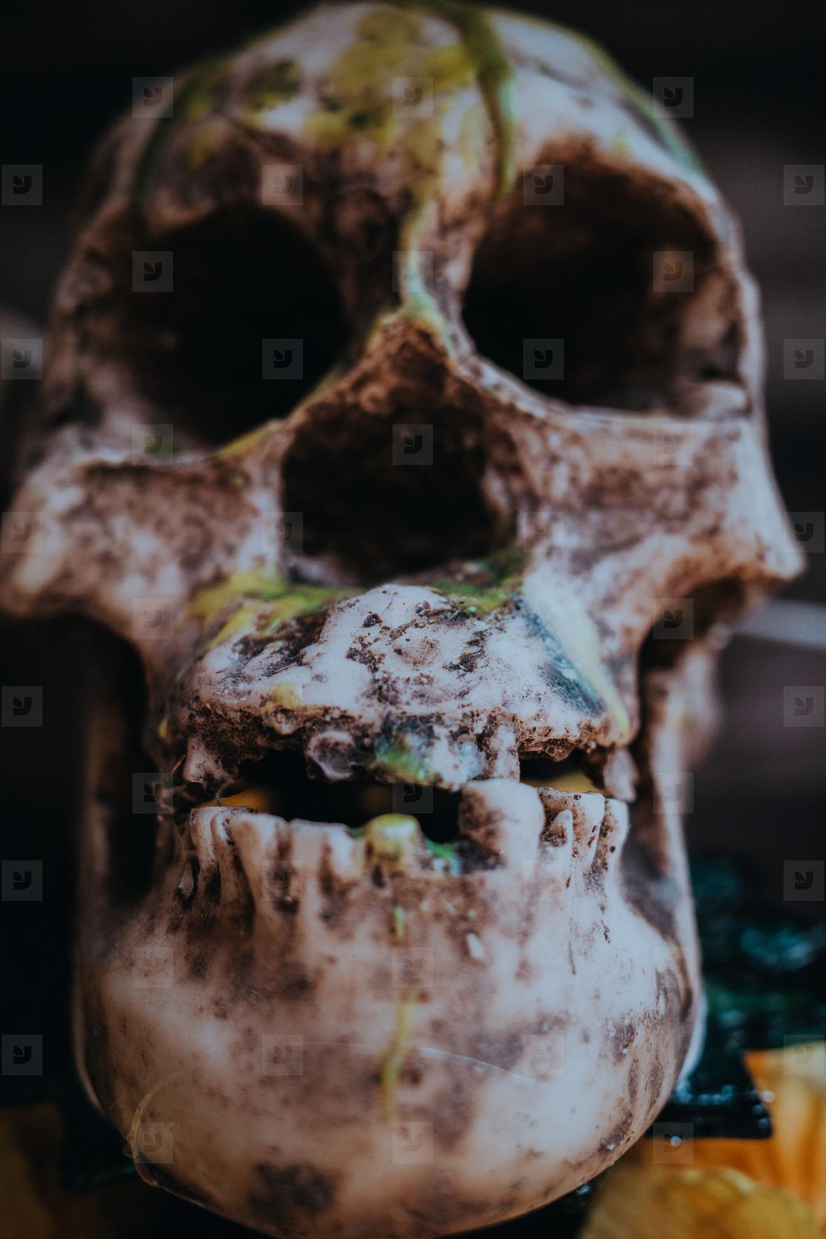 Skull Teeth