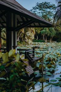 Tropical Park 12
