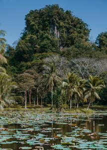 Tropical Park 10