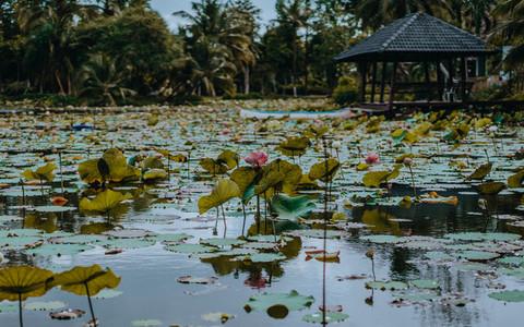 Tropical Park 5