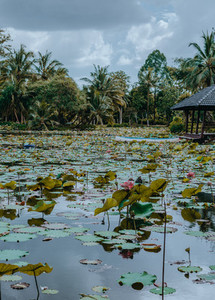 Tropical Park 4