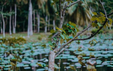 Tropical Park 3