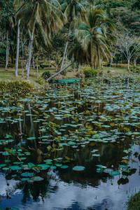 Tropical Park 2