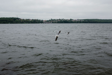 Bird over water