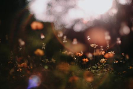 Wild Flower 02