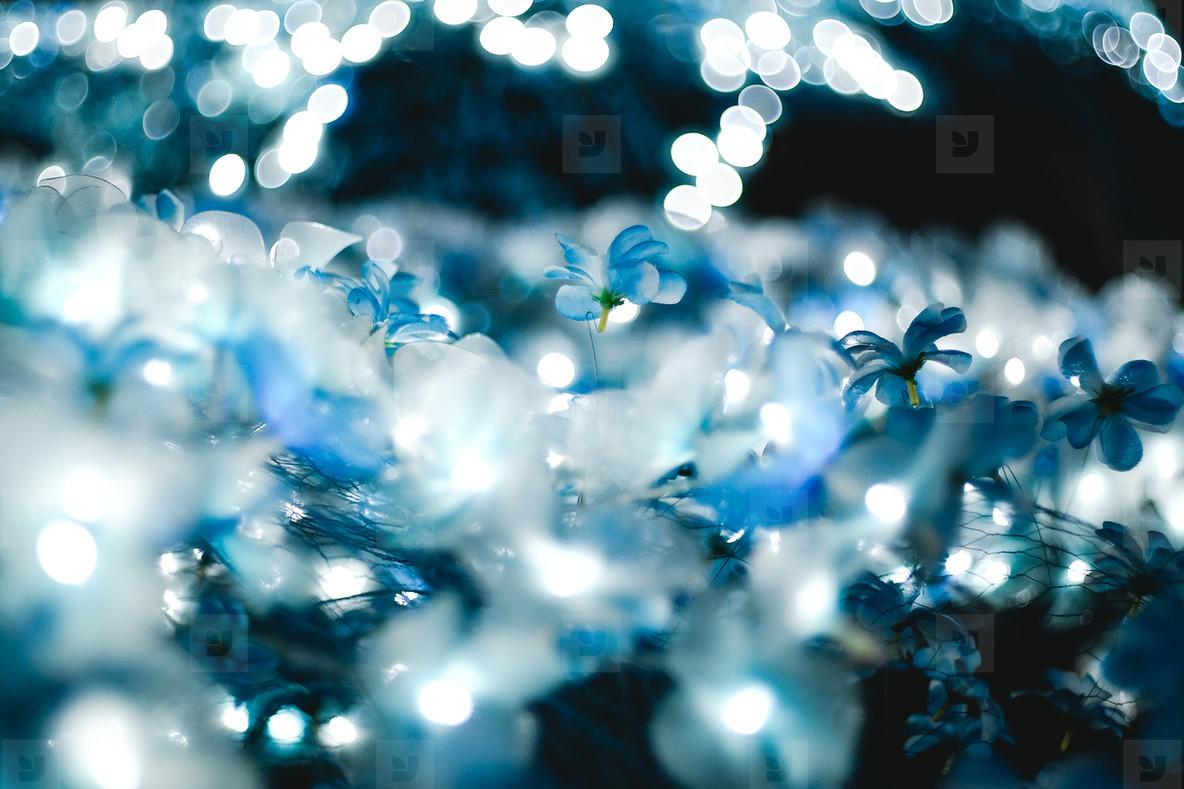The light blue bokeh