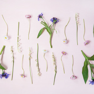 Flat lay of lily of the valley  cornflower  daisy and peony garden flowers in rows  square crop