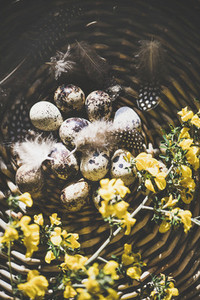 Easter holiday greeting card with quail eggs  top view