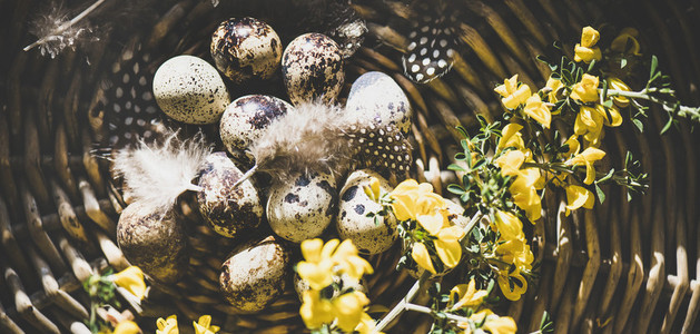 Easter holiday greeting card with quail eggs  wide composition