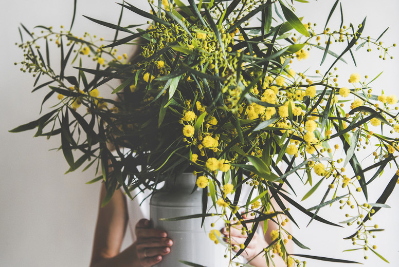 Spring mimosa branches in vase in hand of young woman