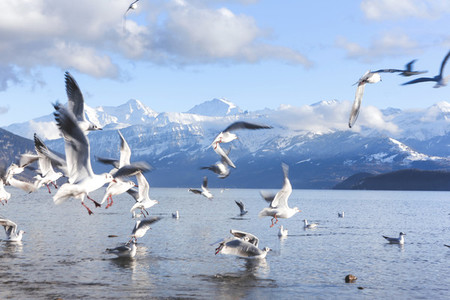 Lake Thun  Switzerland 5