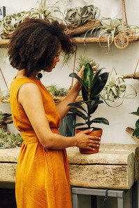 Woman looking on a ficus
