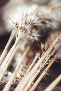 Macro view of dried grass for creating interior design decoration