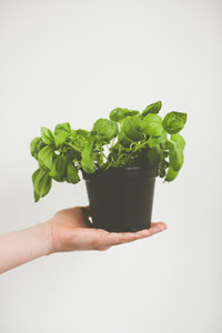 fresh bio garden herbs