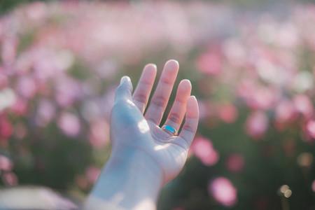 Hand on cosmos garden background