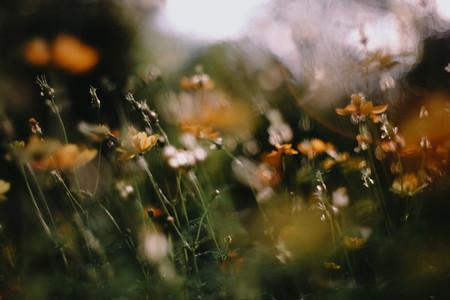 Wild Flower 03