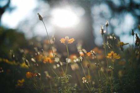 Wild Flower 04