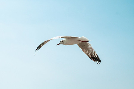 Bird flies over the sea