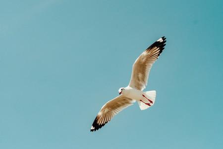 Bird flies over the sea