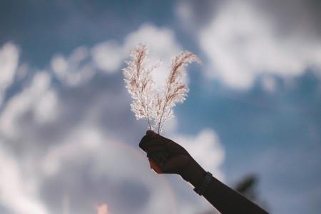 Hand holding grass field