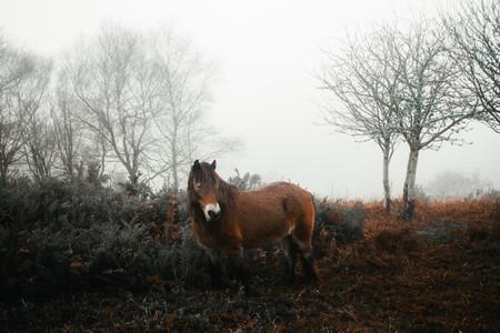 Exmoor wildlife