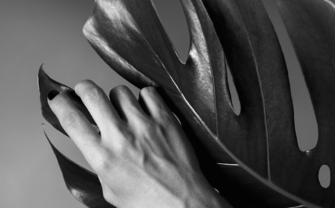 Hand on the monstera leaf Black and white photography Abstract composition